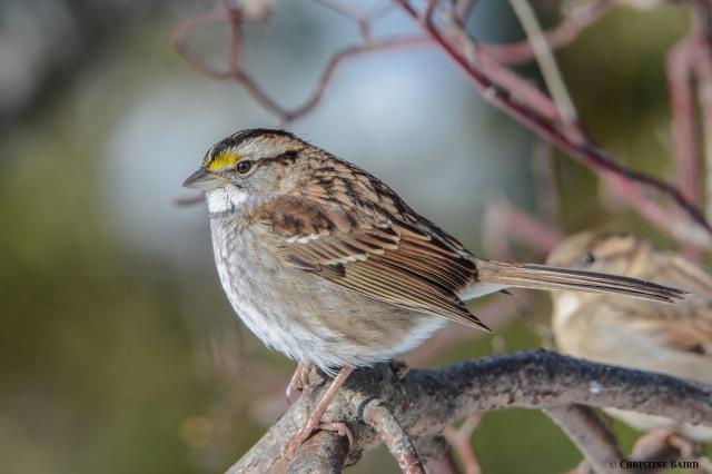 w.t.sparrow1-2